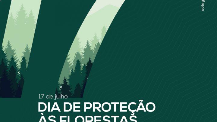 Desmatamento florestal causa danos irreversíveis à vida